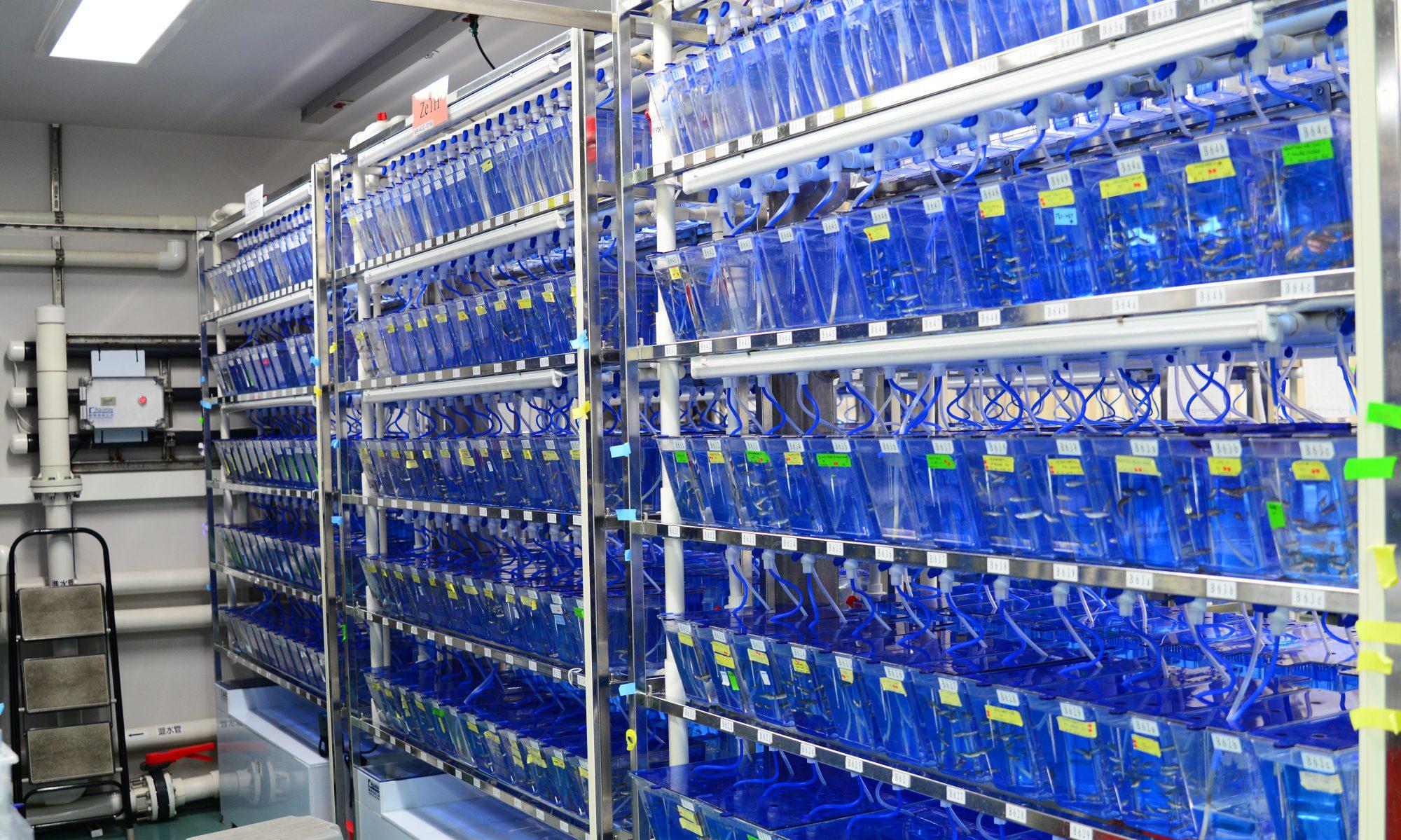 台灣斑馬魚核心設施 - 國家衛生研究院分支